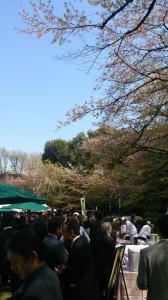 2013年4月 在日本オーストラリア大使館での観桜会